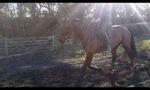 Ali gallops